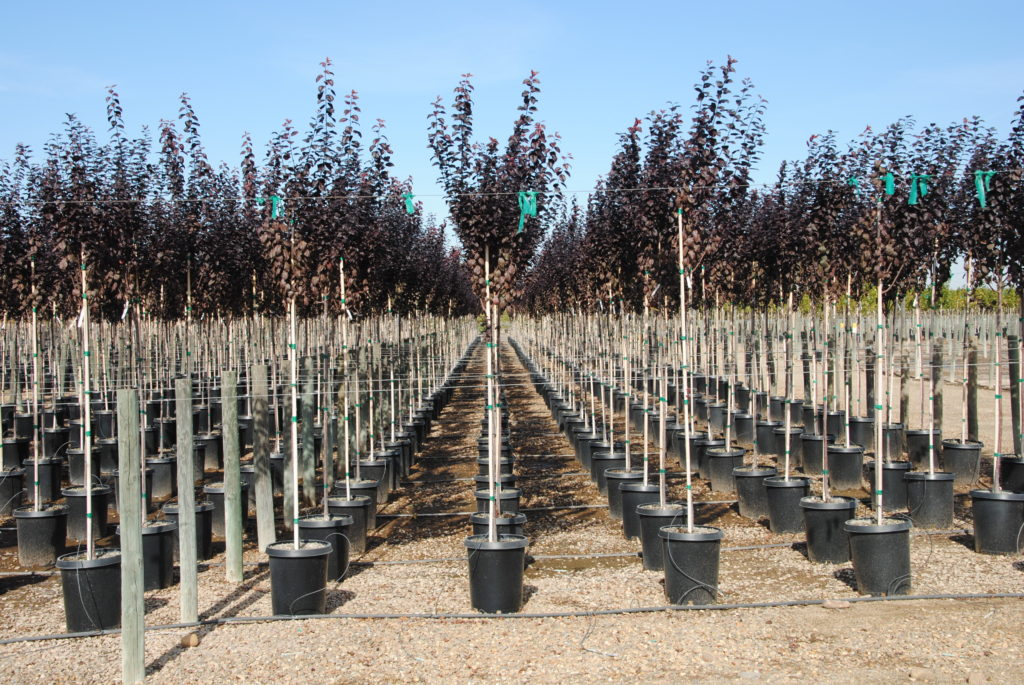 Spot-Spitter Nursery Irrigation Tree Farm Irrigation