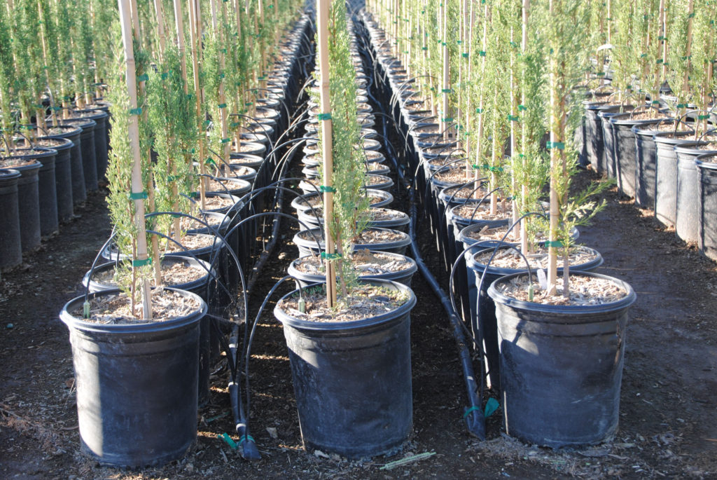 Spot-Spitter Nursery Irrigation Tree Farm Irrigation Cannabis Irrigation