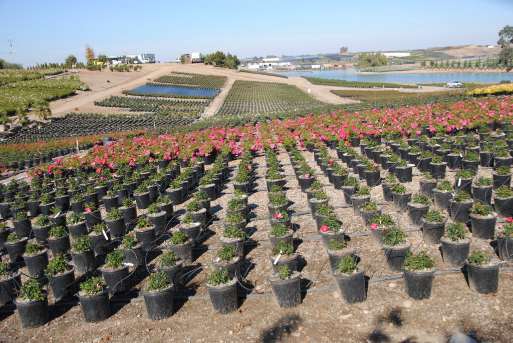 Spot-Spitter Nursery Irrigation